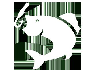Branson Guided Fishing Trips